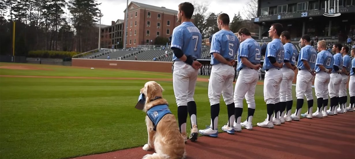 Assistance Dog in the UNC Dugout - Scott Livengood
